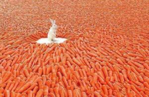 Rabbit Dreams from @Perspective_Pic